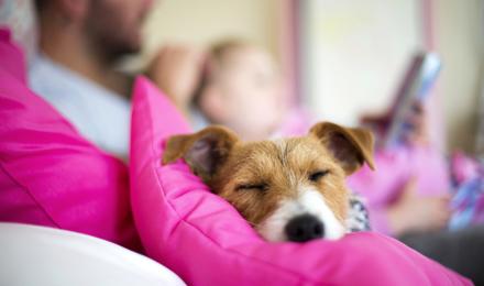 Cachorro En Casa Primeros Dias