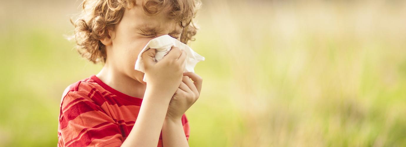 Rinitis Alergica Remedios