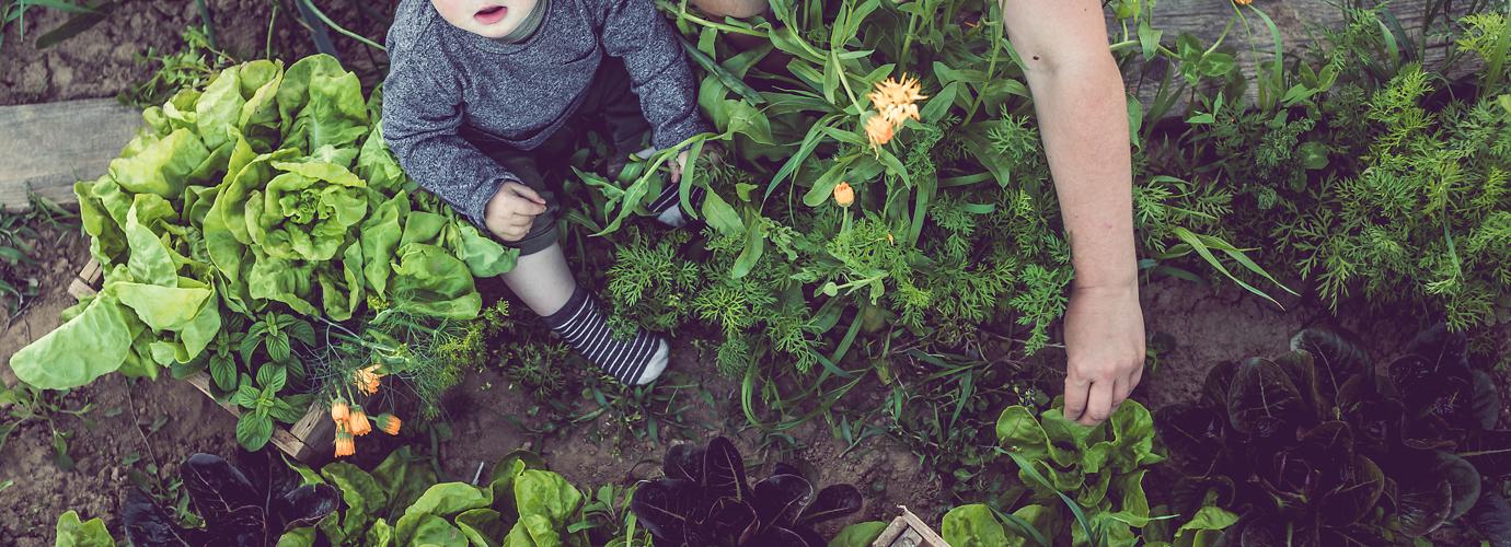 Dicas amigas do ambiente: Como ser mais sustentável em casa