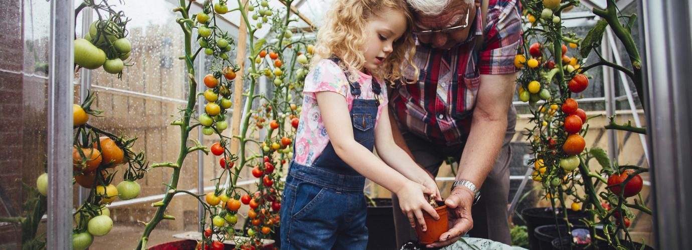 Cómo madurar tomates verdes: 3 formas